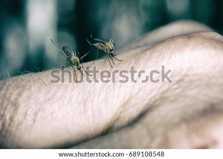 5 Common Bloodsucking Pests