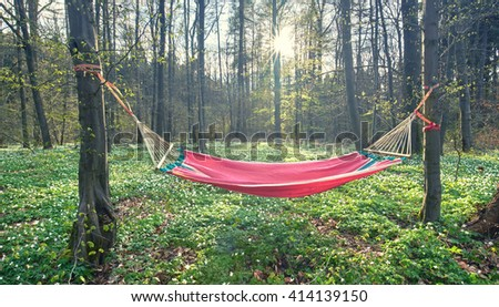 a most beautiful place in nature, hammock in green forest, outdoor adventure