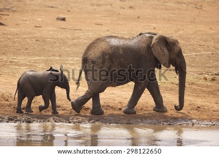 A mother African elephant with her calf