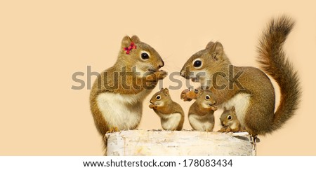 A mother, and father squirrel and their three babies eating sunflower seeds on a birch log in the spring with copy space. Part of a series.  - stock photo