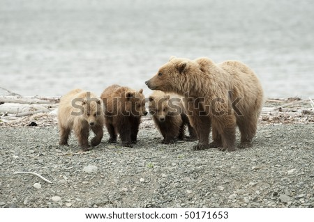 A mother brown bear with her three cubs.