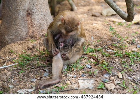A Mother Monkey breast-feed its baby - stock photo