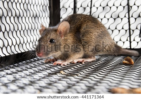 A mouse in the Cage in isolated White Background - stock photo