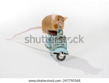 A mouse riding a scooter. - stock photo
