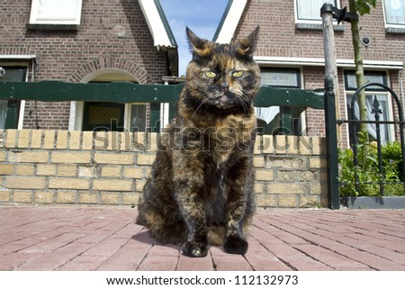 A multicolored cat on the street