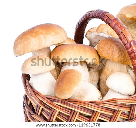 a mushroom in basket - stock photo
