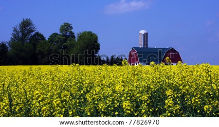 a mustard seed farm in southwestern Ontario - stock photo