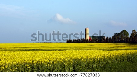 a mustard seed farm in Southwestern Ontario - stock photo