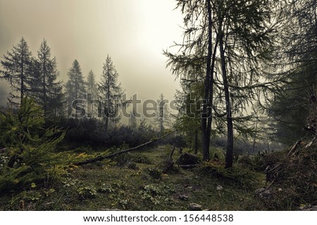 A mystical forest with fog and shining behind trees - stock photo