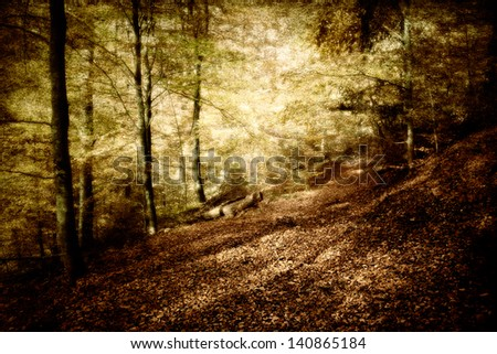 a mystical landscape in a beautiful beech forest - stock photo