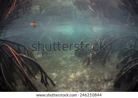 A narrow underwater channel leads through a dense mangrove forest in Raja Ampat, Indonesia. Mangroves are ecologically important habitats and live in tropical regions worldwide. - stock photo