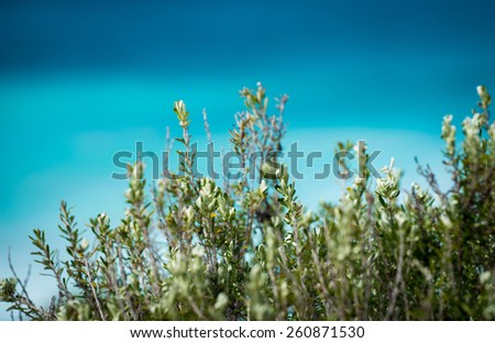 A native plant in front of the ocean - stock photo