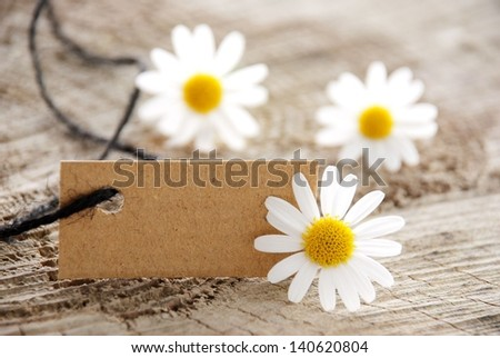 a natural looking banner with copy space and white blossoms as background - stock photo