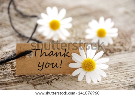 a natural looking banner with thank you and white blossoms as background - stock photo