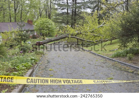 A neighborhood road is blocked by a large oak tree and downed power lines after a spring storm  - stock photo