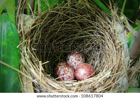 A nest filled with three bird eggs in the branches - stock photo