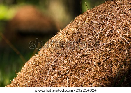 A nest of European red wood ants (Formica rufa) - stock photo