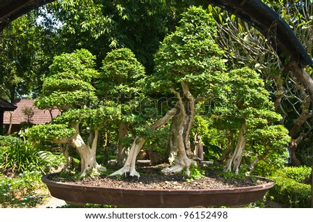 A nice bonsai trees are in the same pot. - stock photo