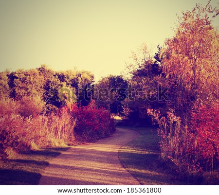 a nice fall image of trees trees with autumn leaves in some woods done with a retro vintage instagram filter  - stock photo