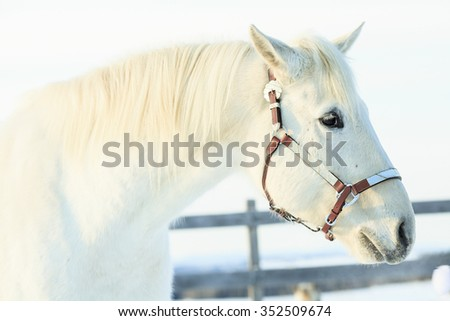 A nice looking white horse in winter season