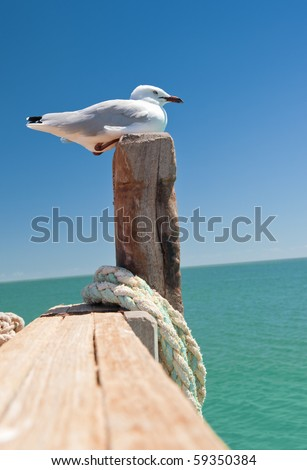 a nice seagull at the sea - stock photo