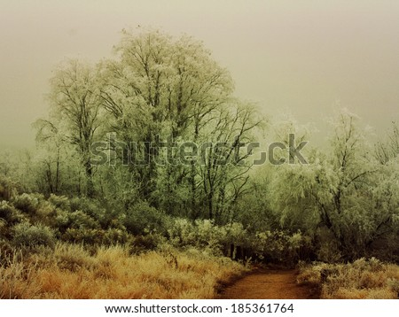 a nice winter image of trees trees without leaves in some woods done with a retro vintage instagram filter - stock photo
