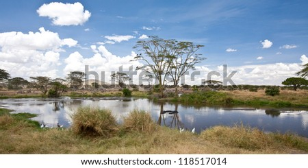 A number of Hippos soak themselves in the water. Serengeti National Park, Tanzania. - stock photo