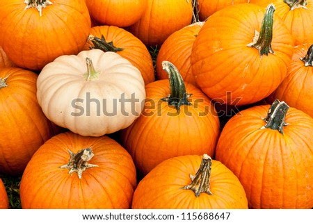 A number of pumpkins and gourds of various sizes at a pumpkin patch.
