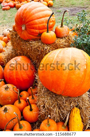 A number of pumpkins and gourds of various sizes at a pumpkin patch with Hay Bales and Indian Corn.