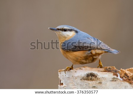 A nuthatch sitting on a tree trunk