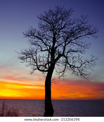 A orange yellow and purple  sky on the shores of lake Michigan are perfect against the silhouette of a single tree - stock photo