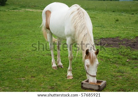 A paint horse eating in a field.