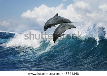 A pair of beautiful dolphins jumping over breaking waves. Hawaii Pacific Ocean wildlife scenery. Marine animals in natural habitat. - stock photo