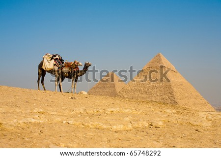 A pair of camels at the viewpoint wait while the Pyramids of Cheops and Khafre loom in the distance at Giza in Cairo, Egypt - stock photo