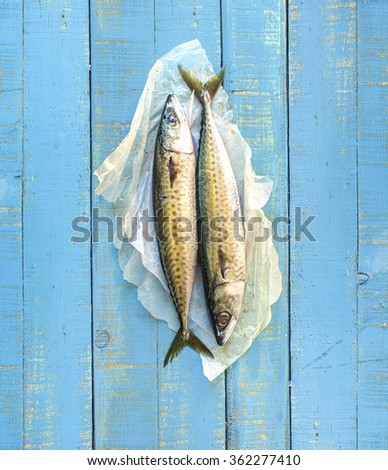 A pair of fresh mackerels (Scomber scombrus) on a rustic mediterranean blue wooden table. - stock photo
