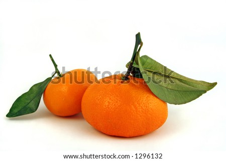a pair of fresh mandarin oranges with stems and green leaves - stock photo