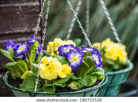 A pair of hanging baskets hang from the corner of a shed. - stock photo