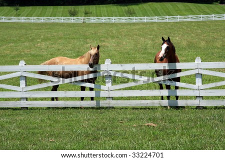 A pair of healthy horses in a pasture looking over the fence - stock photo