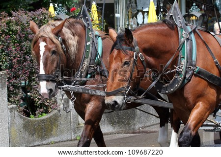 A Pair of Horses at Neuschwanstein Castle in the Bavarian Alps of Germany - stock photo