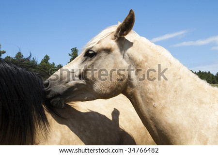 a pair of horses playing