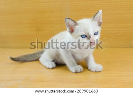 A pair of kittens stare at each other on a brown wood background - stock photo