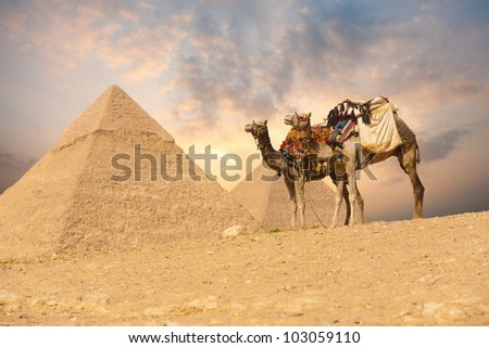 A pair of saddle backed tourist camels in foreground waiting on a sloping desert near the Great Giza pyramids in Cairo, Egypt in front of brilliant, colorful sunset sky. Horizontal copy space - stock photo