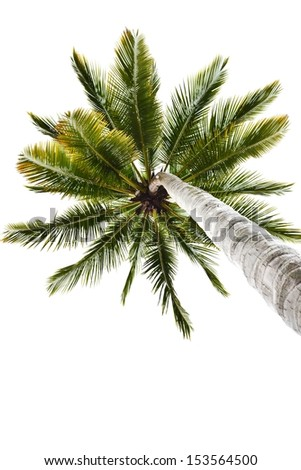 A palm tree of coconut isolated on white background - stock photo