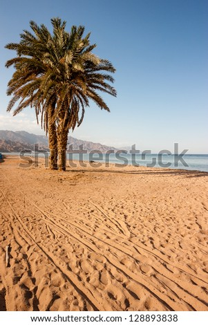 A palm tree on a beach in the late afternoon golden sun