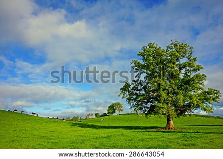 A panorama view of the Cornish countryside with Friesian cows grazing peacefully in the distance, with blue sky and clouds, Cornwall, United Kingdom - stock photo