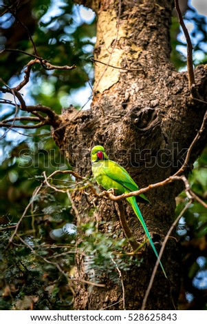 A Parakeet in Keoladevi national park bird reserve