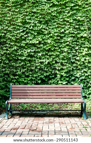 A park bench against a wall of ivy in a portrait orientation.