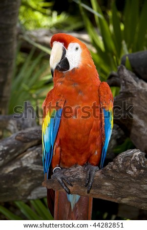 A parrot from Mexico in the jungle - stock photo
