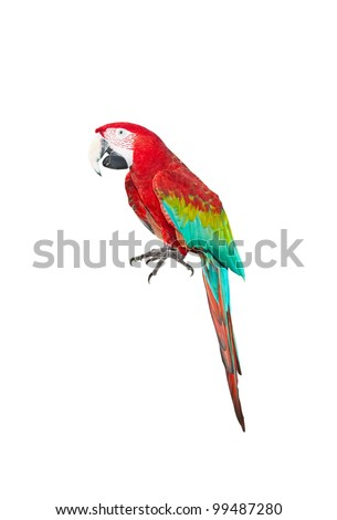 A parrot, isolated on white background - stock photo