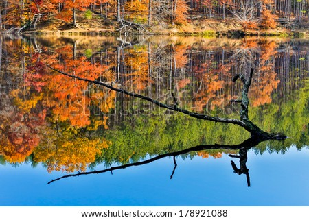 A partially sunken tree branch rises out of a lake reflecting intensely colorful fall foliage. Image captured at Strahl Lake in Indiana's Brown County State Park. - stock photo